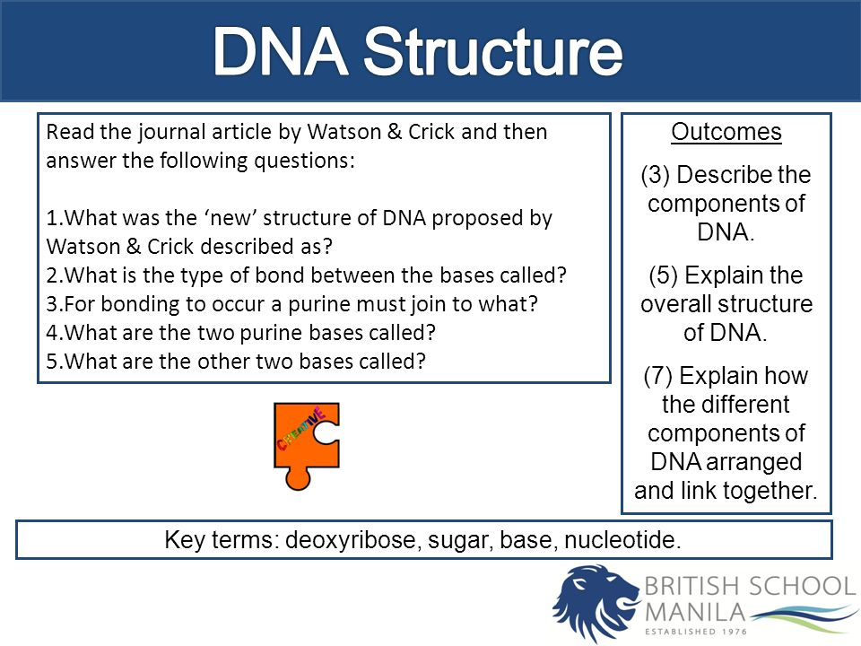 describe the components and structure of a dna nucleotide