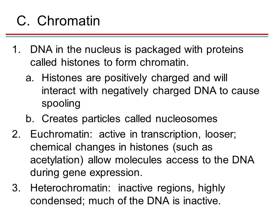 C.Chromatin 1.DNA in the nucleus is packaged with proteins called histones to form chromatin.