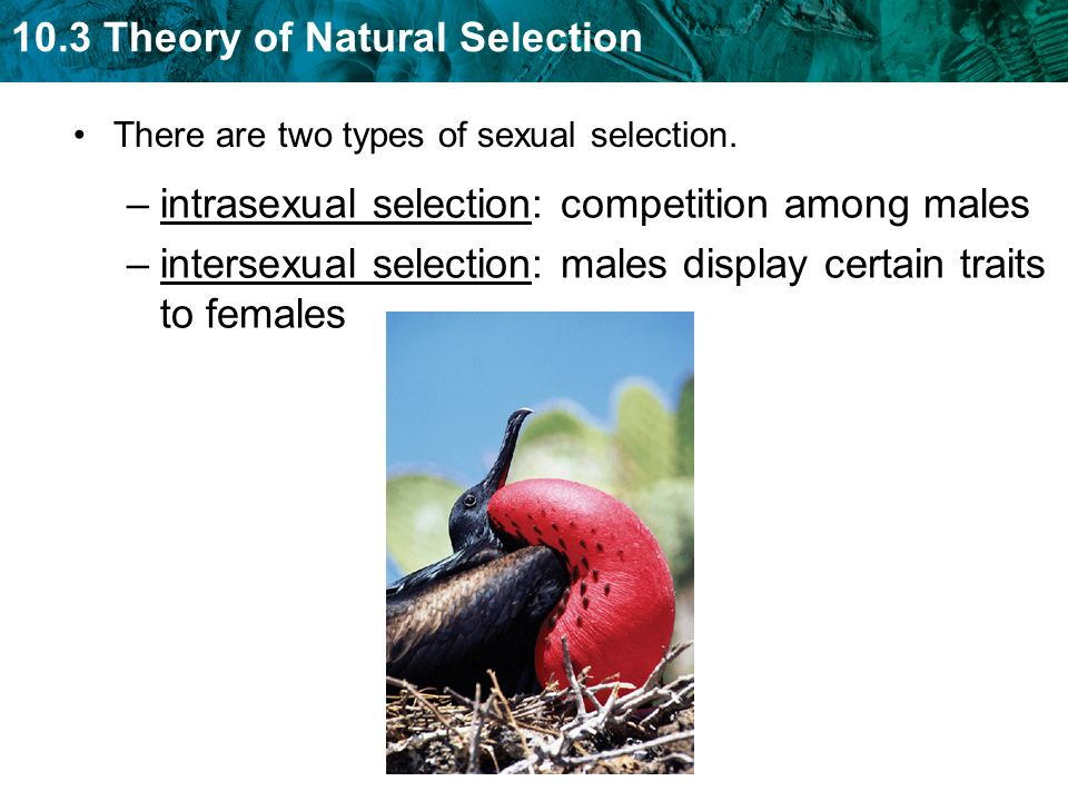 natural selection and sexual selection Darwin and natural selection most educated people in europe and the americas during the 19th century had their first full exposure to the concept of evolution through the writings of charles darwin.