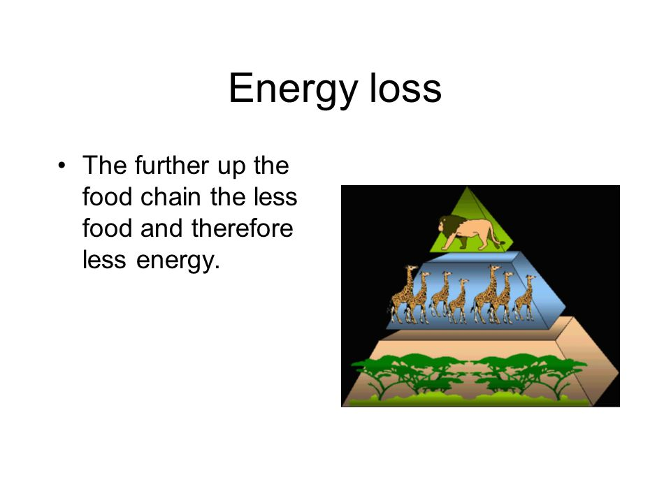 Energy loss The further up the food chain the less food and therefore less energy.