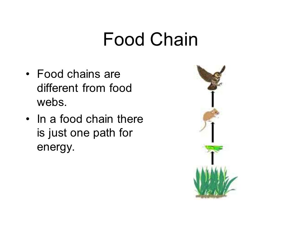Food Chain Food chains are different from food webs.