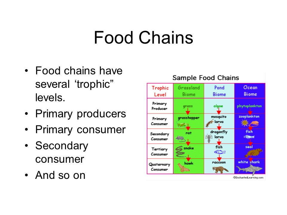 Food Chains Food chains have several 'trophic levels.