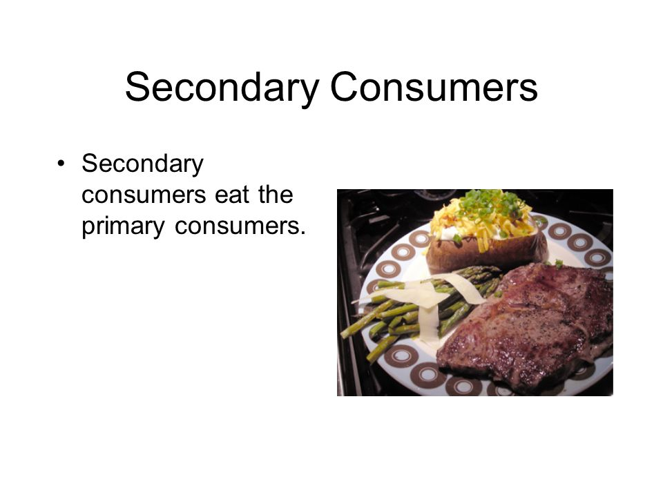 Secondary Consumers Secondary consumers eat the primary consumers.