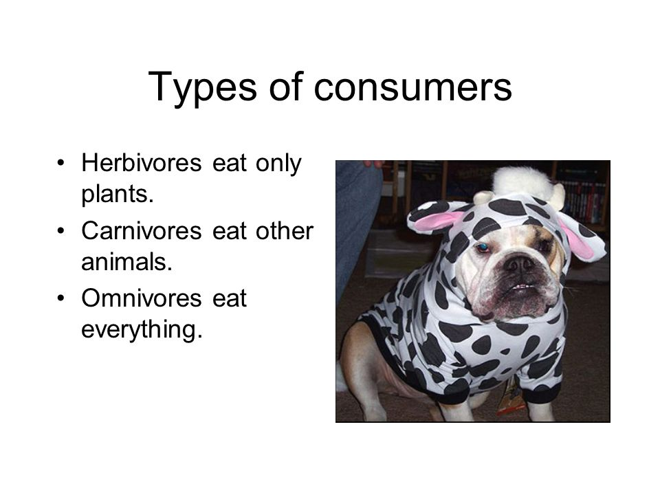 Types of consumers Herbivores eat only plants. Carnivores eat other animals.