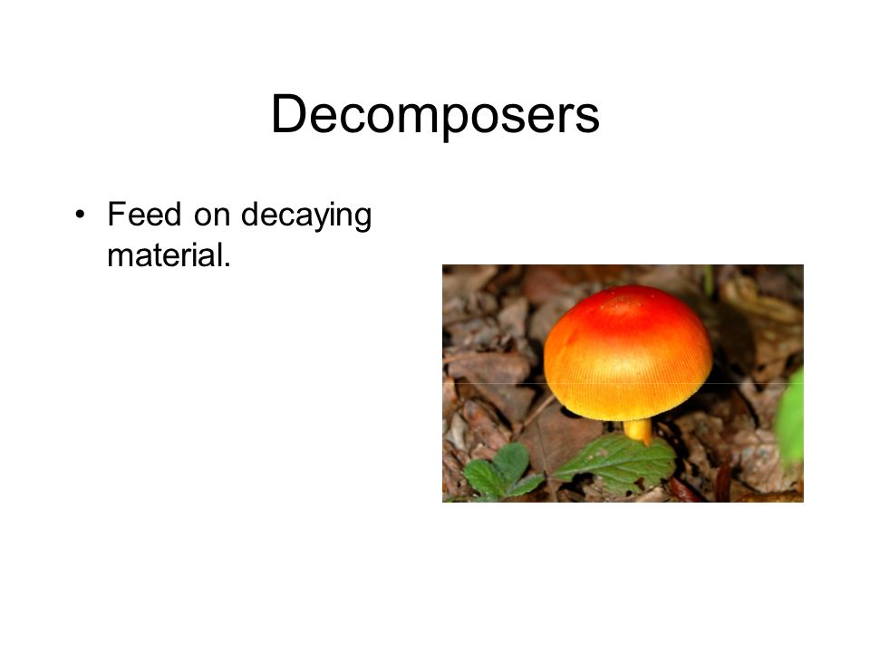 Decomposers Feed on decaying material.