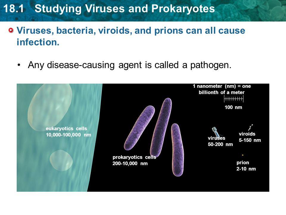 18.1 Studying Viruses and Prokaryotes Viruses, bacteria, viroids, and prions can all cause infection.