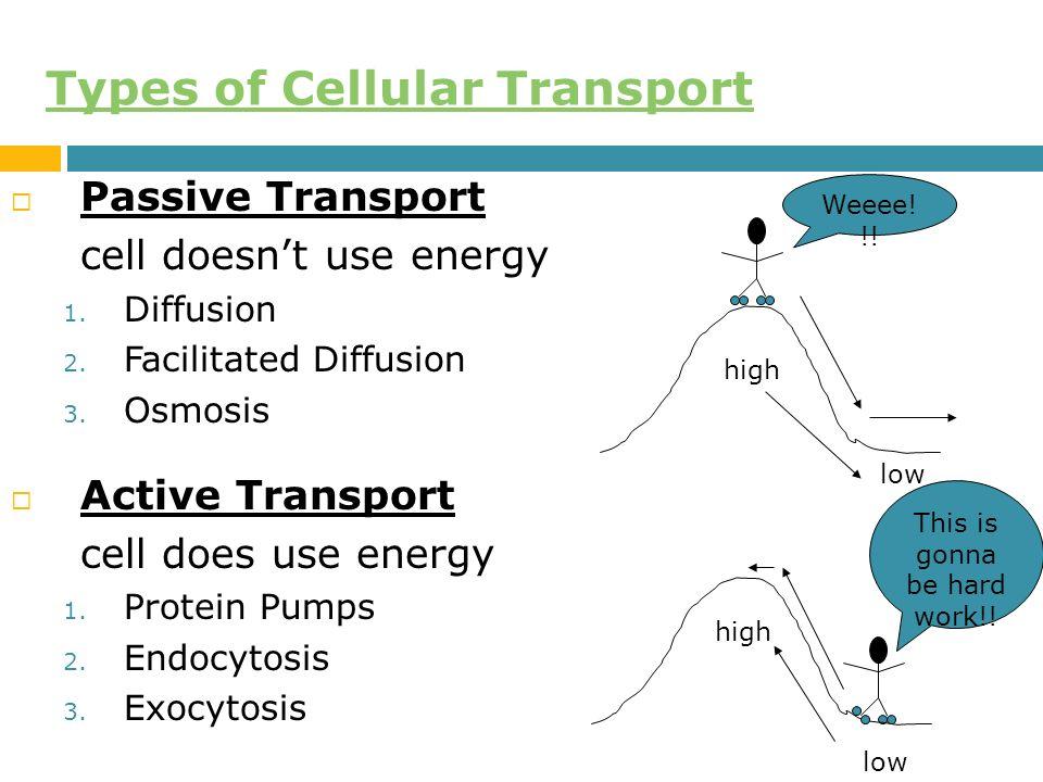 Membran sel dan transport agustina setiawati m apt ppt download 22 sifat membran sel terhadap molekul ccuart Choice Image