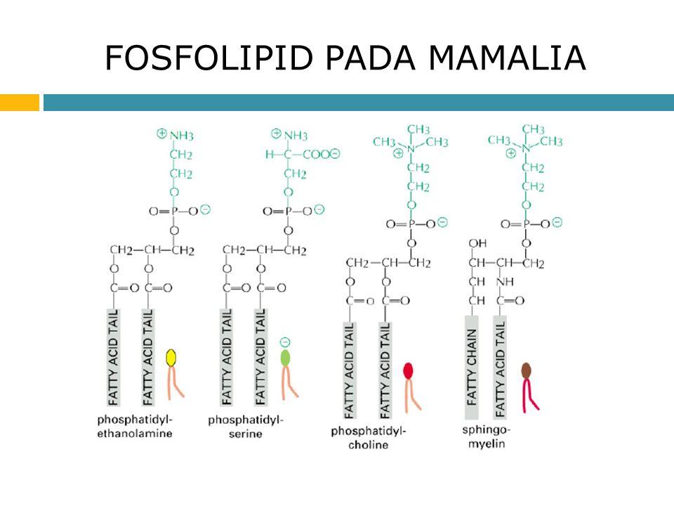 Membran sel dan transport agustina setiawati m apt ppt download 6 struktur fosfolipid ccuart Choice Image
