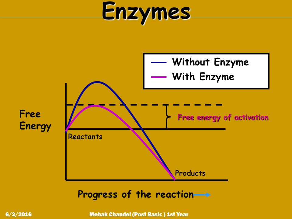 Enzymes Free Energy Progress of the reaction Reactants Products Free energy of activation Without Enzyme With Enzyme Mehak Chandel (Post Basic ) 1st Year6/2/2016