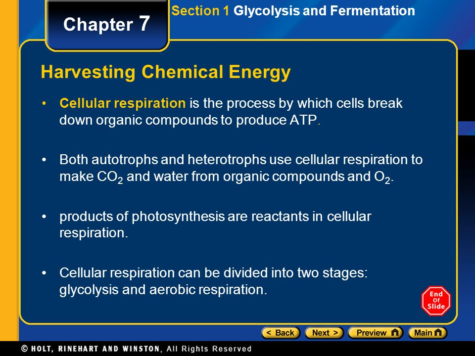 an analysis of the process of glycolysis and the aerobic respiration Aerobic respiration is the process most living things undergo to use food energy here, we will investigate the definition, the steps of the process, what goes in and what comes out of the process, and the chemical formula.