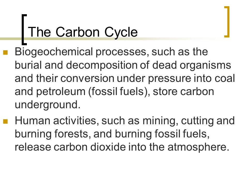 The Carbon Cycle Biogeochemical processes, such as the burial and decomposition of dead organisms and their conversion under pressure into coal and petroleum (fossil fuels), store carbon underground.