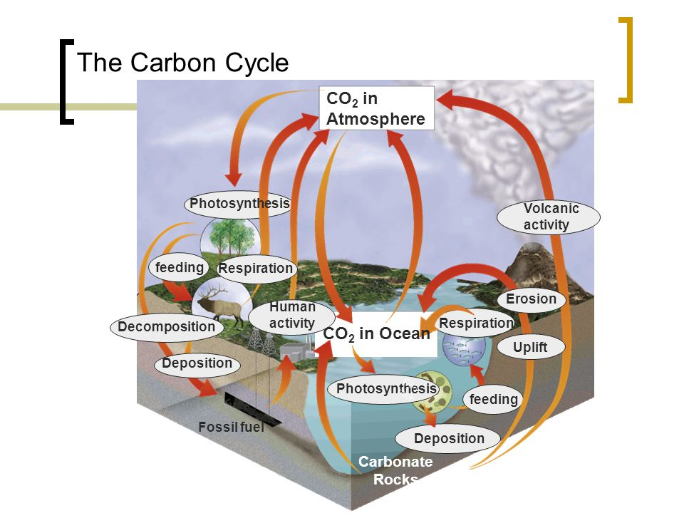 The Carbon Cycle CO 2 in Atmosphere Photosynthesis feeding Respiration Deposition Carbonate Rocks Deposition Decomposition Fossil fuel Volcanic activity Uplift Erosion Respiration Human activity CO 2 in Ocean Photosynthesis