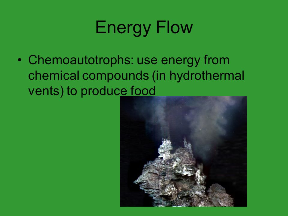 Energy Flow Chemoautotrophs: use energy from chemical compounds (in hydrothermal vents) to produce food