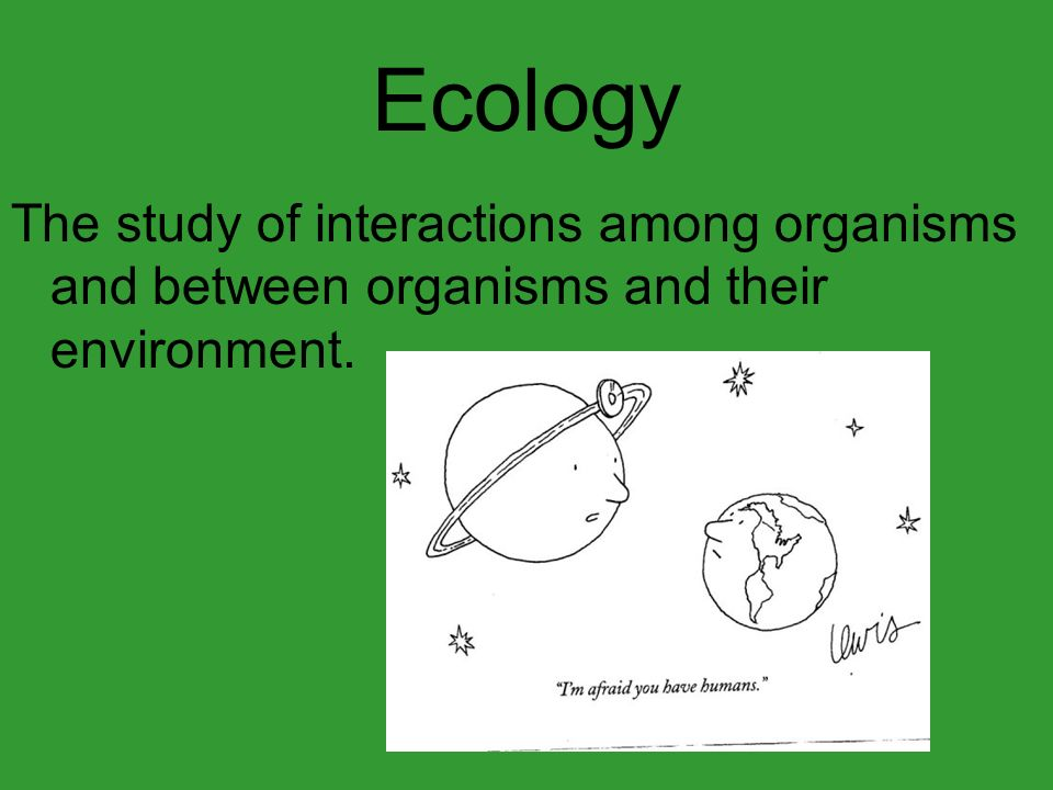 Ecology The study of interactions among organisms and between organisms and their environment.