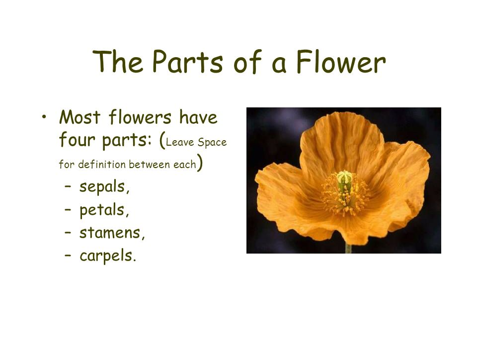 The Parts of a Flower Most flowers have four parts: ( Leave Space for definition between each ) –sepals, –petals, –stamens, –carpels.
