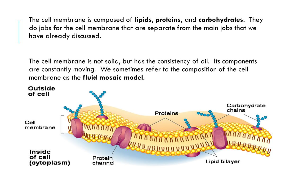 Cell membrane structure title your notes cell membrane 3 the pooptronica
