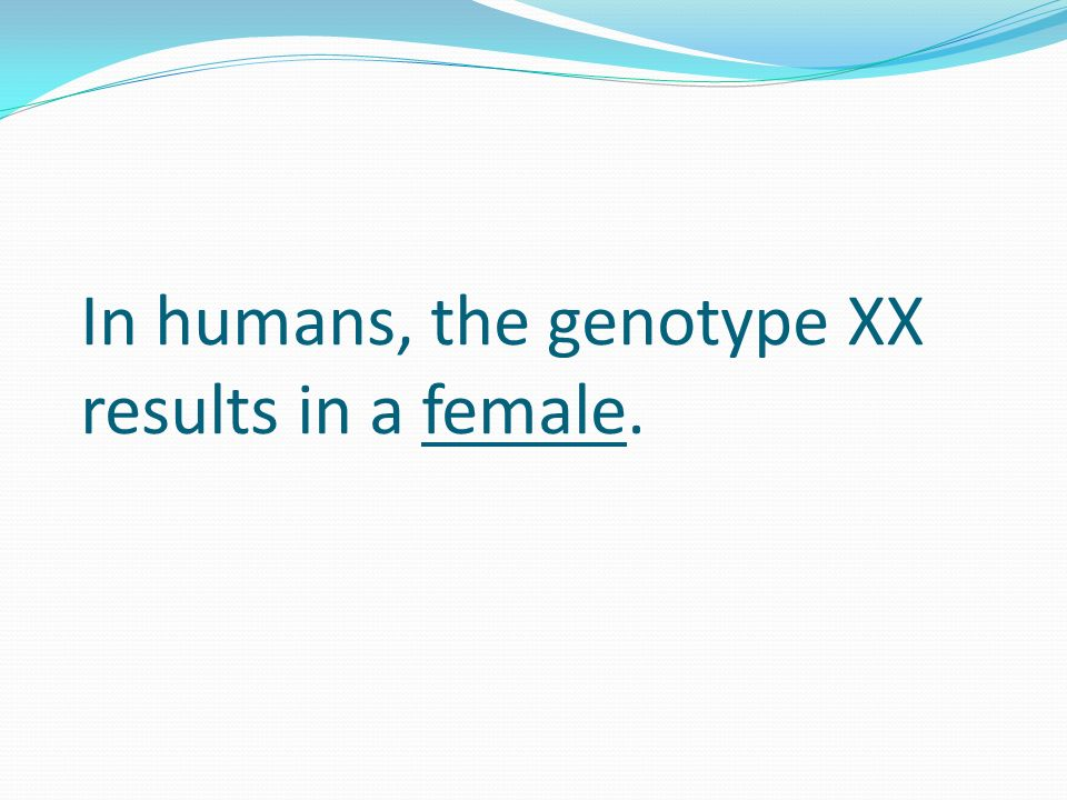 In humans, the genotype XX results in a female.