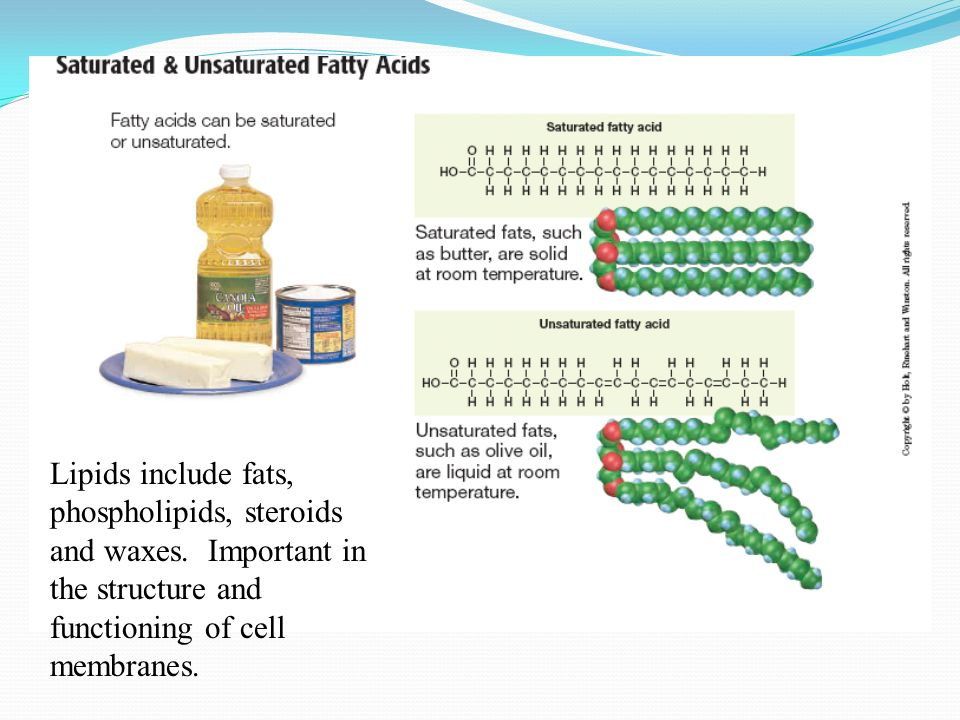 Lipids include fats, phospholipids, steroids and waxes.