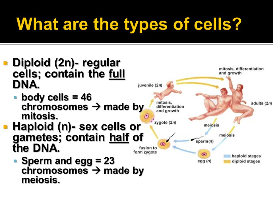 Monday Q: Explain why is DNA replication called semi-conservative ...
