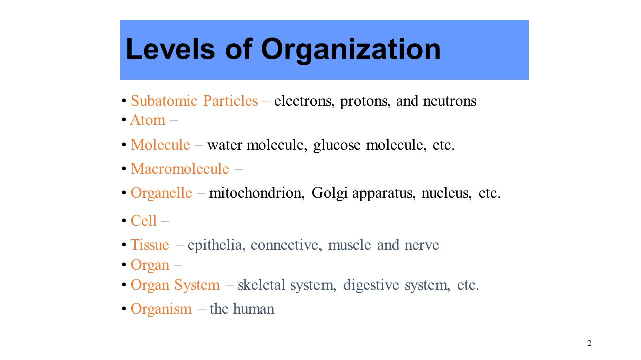 """1 Anatomy & Physiology Anatomy – Physiology – """"The complementarity ..."""