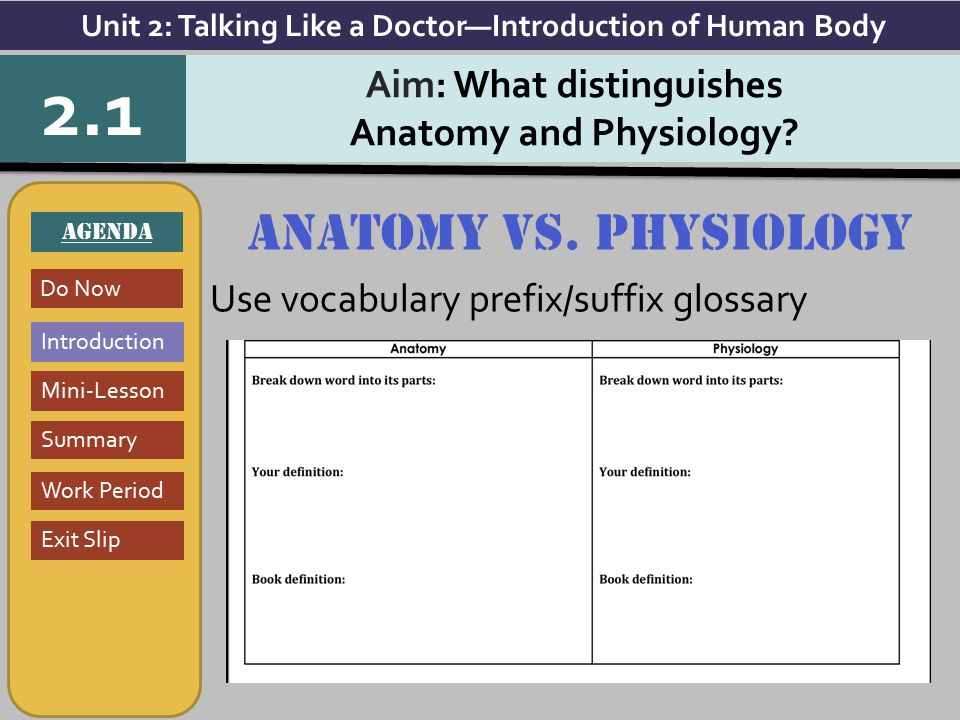 Exelent Anatomy And Physiology Vocabulary Dictionary Elaboration ...