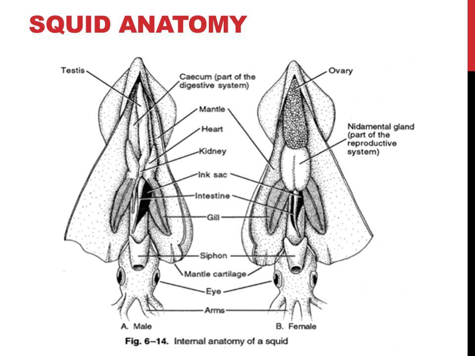 Awesome Sponge External Anatomy Diagram Motif - Anatomy And ...