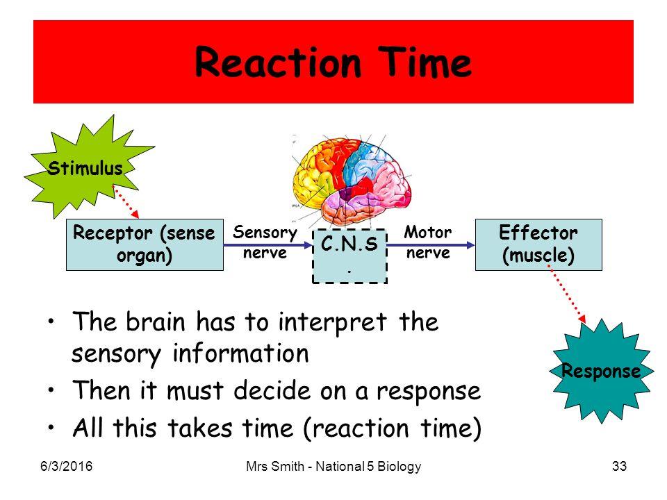 chapter 11: control & communication part 1: nervous control, Muscles