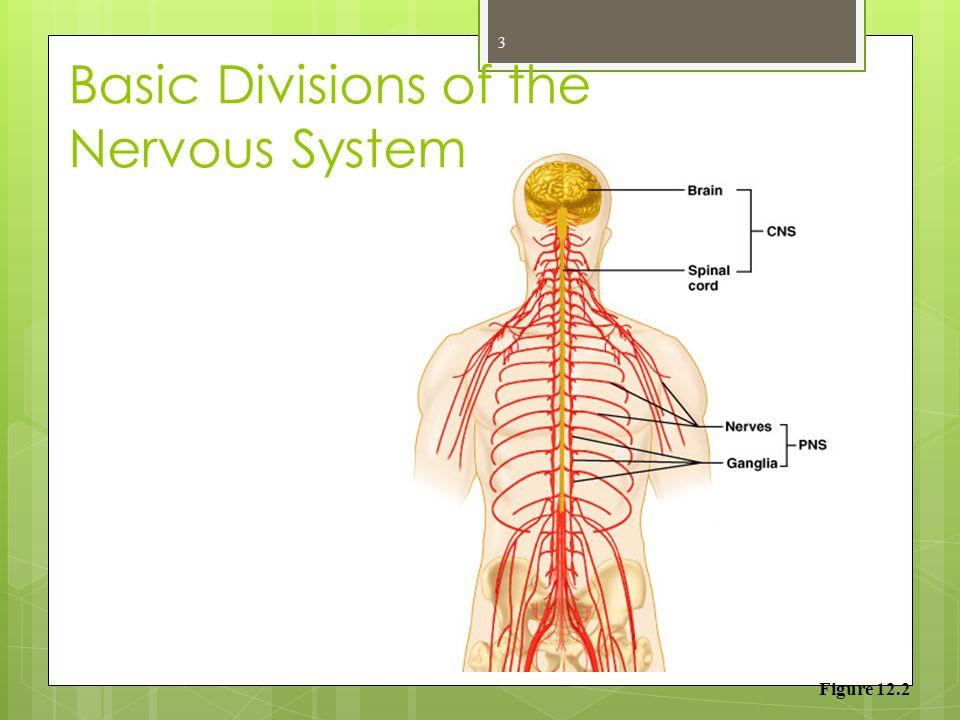Nerve Cells 1 Nervous System Three Parts Of The Nervous System