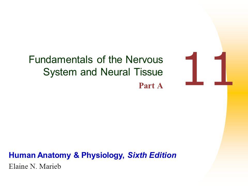 Human Anatomy & Physiology, Sixth Edition Elaine N. Marieb 11 ...