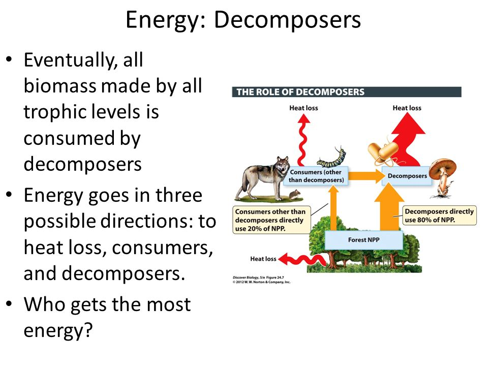 Eventually, all biomass made by all trophic levels is consumed by decomposers Energy goes in three possible directions: to heat loss, consumers, and decomposers.