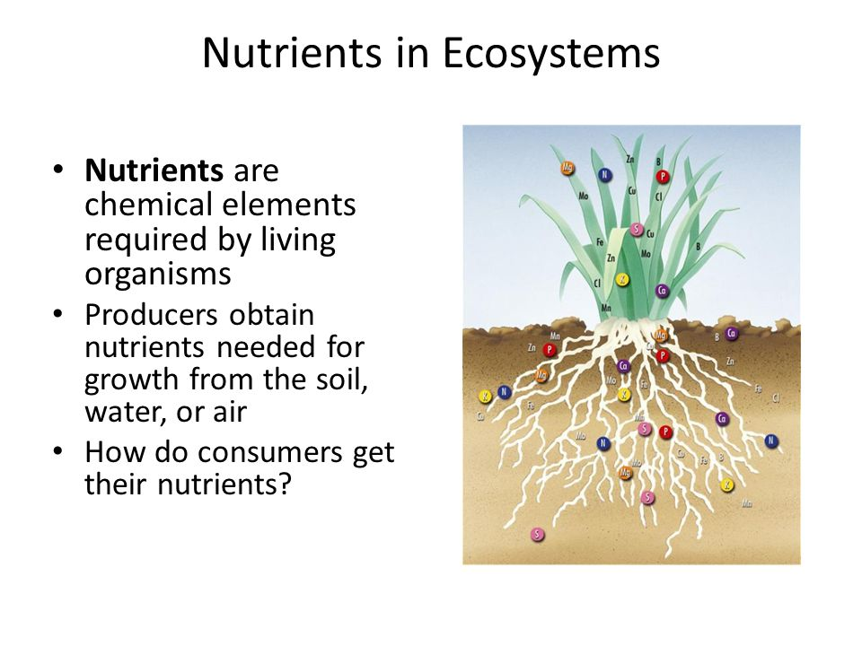 Nutrients in Ecosystems Nutrients are chemical elements required by living organisms Producers obtain nutrients needed for growth from the soil, water, or air How do consumers get their nutrients