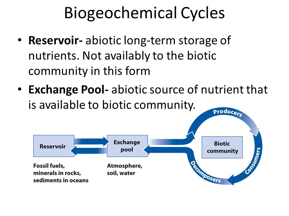 Biogeochemical Cycles Reservoir- abiotic long-term storage of nutrients.