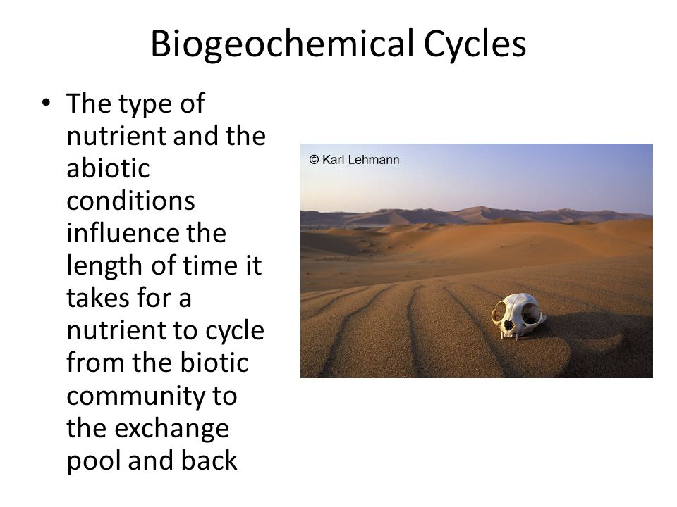 Biogeochemical Cycles The type of nutrient and the abiotic conditions influence the length of time it takes for a nutrient to cycle from the biotic community to the exchange pool and back