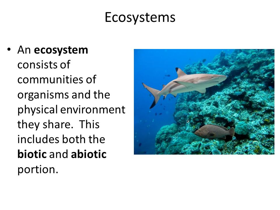 Ecosystems An ecosystem consists of communities of organisms and the physical environment they share.