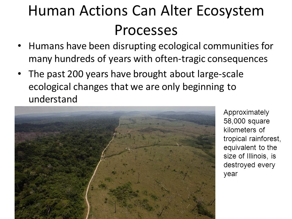 Human Actions Can Alter Ecosystem Processes Humans have been disrupting ecological communities for many hundreds of years with often-tragic consequences The past 200 years have brought about large-scale ecological changes that we are only beginning to understand Approximately 58,000 square kilometers of tropical rainforest, equivalent to the size of Illinois, is destroyed every year