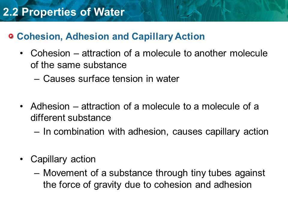 2.2 Properties of Water Cohesion, Adhesion and Capillary Action Cohesion – attraction of a molecule to another molecule of the same substance –Causes surface tension in water Adhesion – attraction of a molecule to a molecule of a different substance –In combination with adhesion, causes capillary action Capillary action –Movement of a substance through tiny tubes against the force of gravity due to cohesion and adhesion