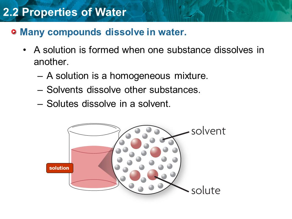 2.2 Properties of Water Many compounds dissolve in water.