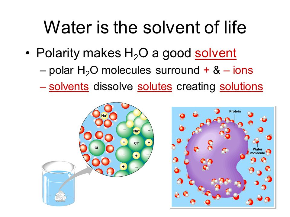 How does H 2 O get to top of trees.