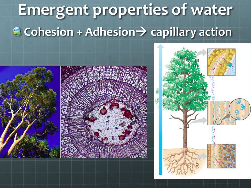 Emergent properties of water Adhesion