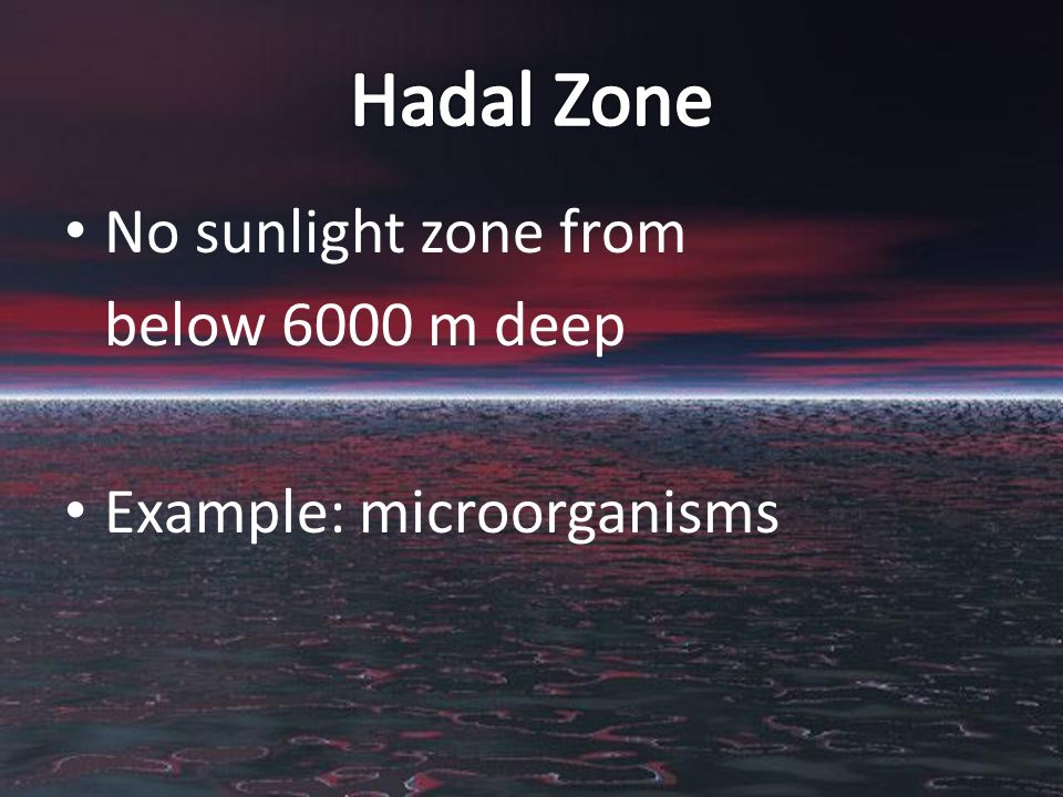 No sunlight zone from below 6000 m deep Example: microorganisms