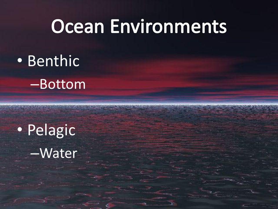 Benthic – Bottom Pelagic – Water