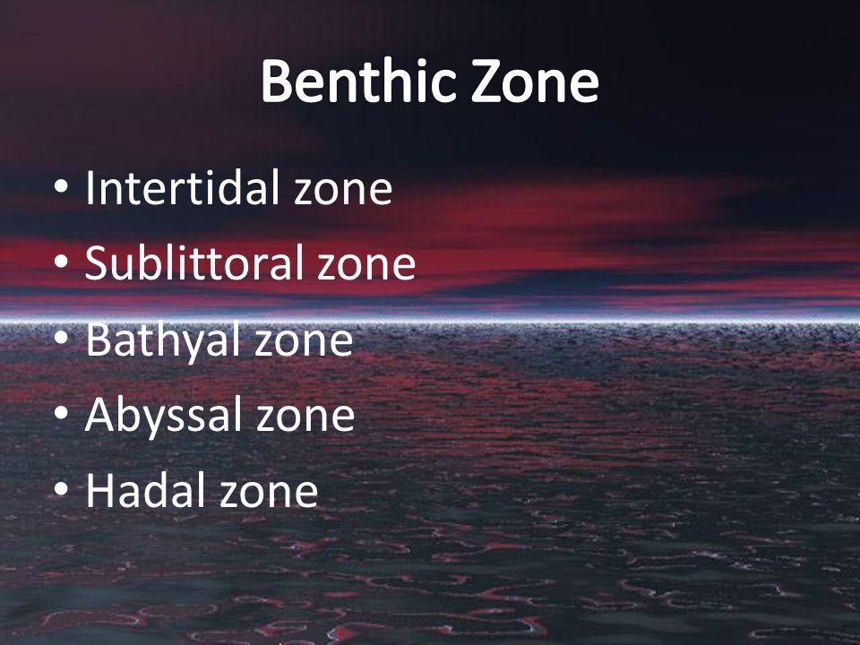 Intertidal zone Sublittoral zone Bathyal zone Abyssal zone Hadal zone