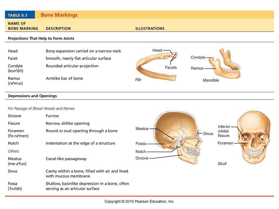 Bone Markings Chart Denmarpulsar