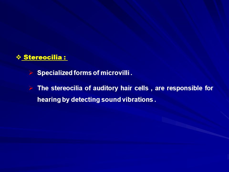  Stereocilia :  Specialized forms of microvilli.