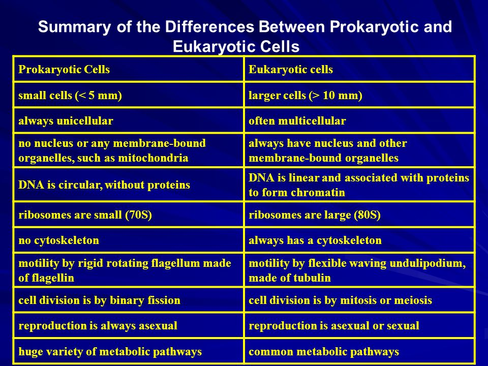 Summary of the Differences Between Prokaryotic and Eukaryotic Cells Eukaryotic cells Prokaryotic Cells larger cells (> 10 mm)small cells (< 5 mm) often multicellularalways unicellular always have nucleus and other membrane-bound organelles no nucleus or any membrane-bound organelles, such as mitochondria DNA is linear and associated with proteins to form chromatin DNA is circular, without proteins ribosomes are large (80S)ribosomes are small (70S) always has a cytoskeletonno cytoskeleton motility by flexible waving undulipodium, made of tubulin motility by rigid rotating flagellum made of flagellin cell division is by mitosis or meiosiscell division is by binary fission reproduction is asexual or sexualreproduction is always asexual common metabolic pathwayshuge variety of metabolic pathways