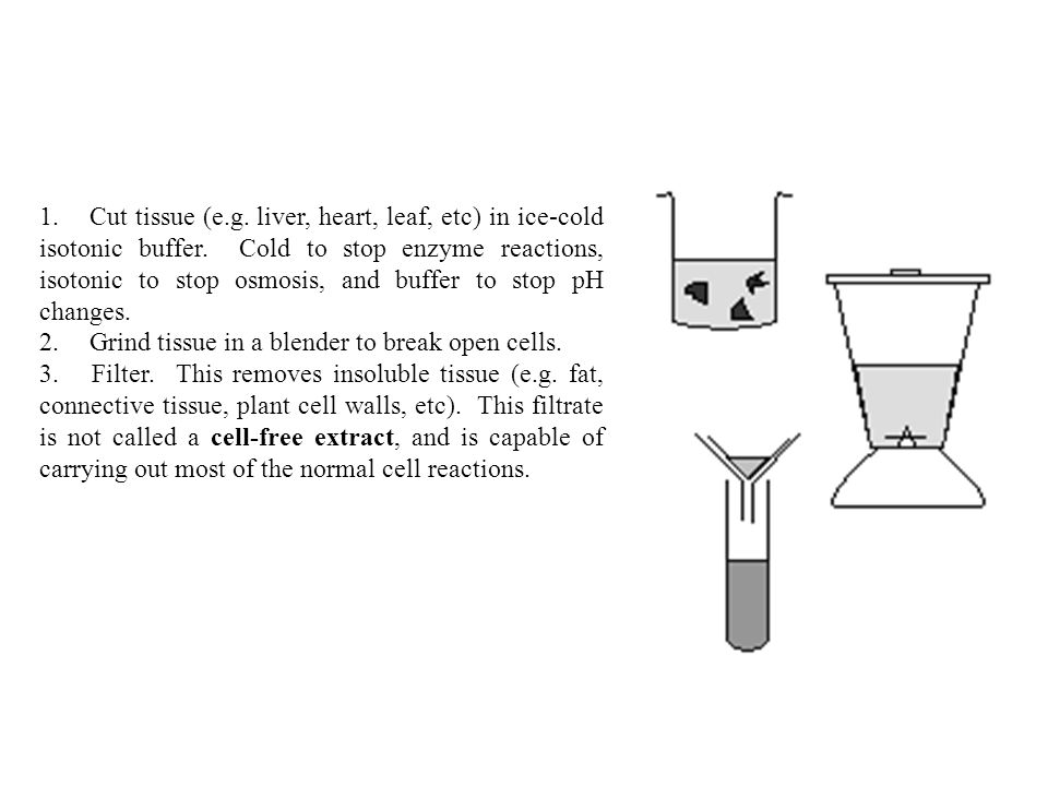 1. Cut tissue (e.g. liver, heart, leaf, etc) in ice-cold isotonic buffer.