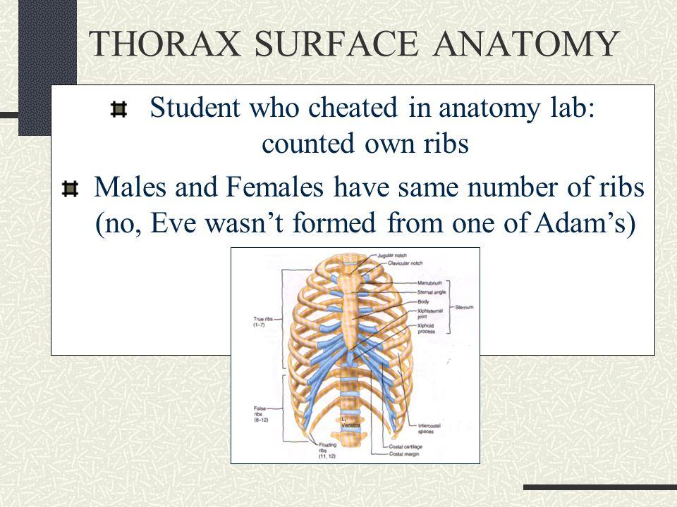 Abdominal surface anatomy