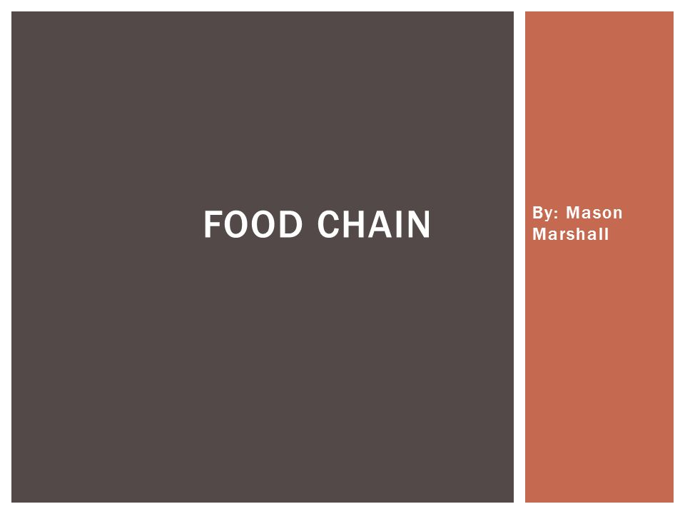 By: Mason Marshall FOOD CHAIN