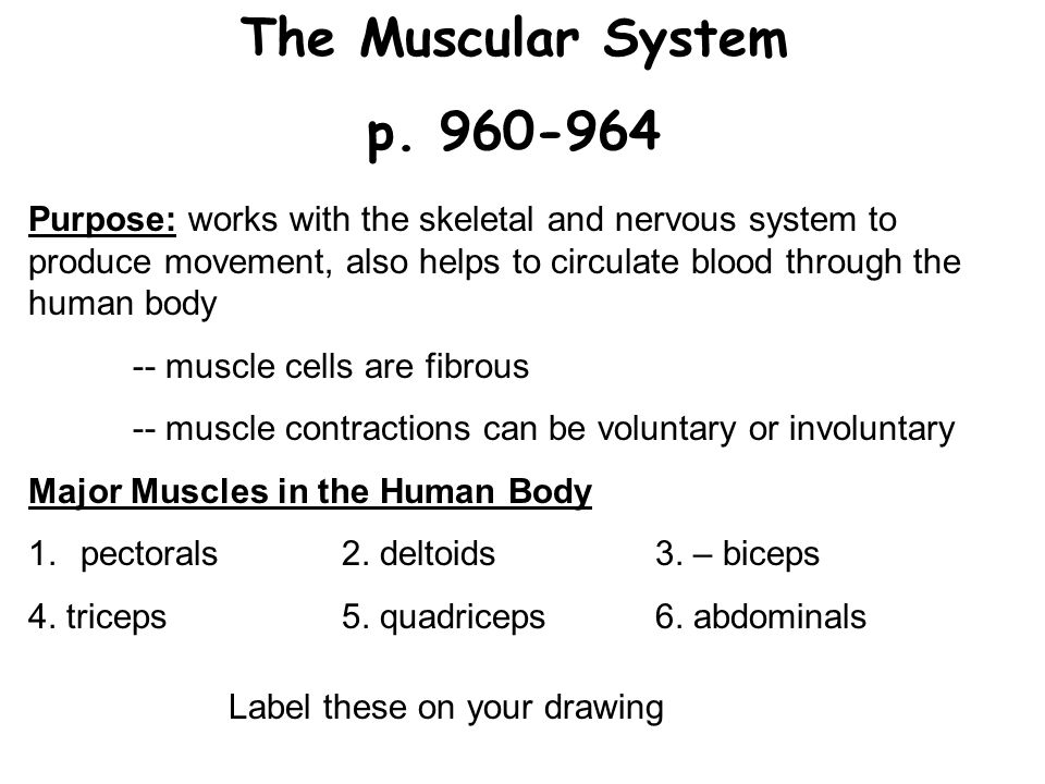 human anatomy and body systems. levels of organization remember, Muscles