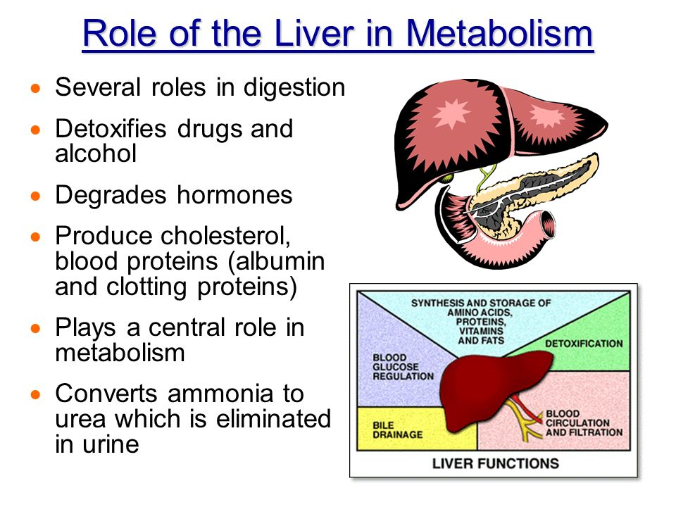 Chapter 14 Digestive Metabolism Development Nutrients Used